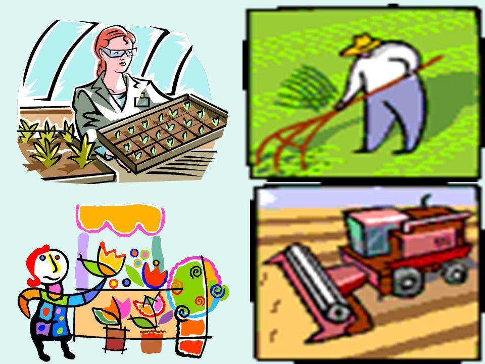 ΕΠΑΓΓΕΛΜΑΤΑ σχετικά με κήπους, θερμοκήπια και γενικά με τη γεωργία Κηπουρός-Ανθοκόμος // Τεχνικός Ανθοκομίας Τεχνολόγος Ανθοκομίας & Αρχιτεκτονικής Τοπίου Τεχνικός Θερμοκηπίων Τεχνολόγος Θερμοκηπιακών Καλλιεργειών & Ανθοκομίας Τεχνολόγος Γεωργικών Προϊόντων Τεχνολόγος Φυτικής Παραγωγής Γεωπόνος Φυτικής Παραγωγής Τεχνικός Βιολογικής & Οικολογικής Γεωργίας Γεωπόνος Βιοτεχνολόγος Τεχνικός Αμπελουργίας – Οινοτεχνίας Γεωπόνος Δασολόγος & Φυσικού Περιβάλλοντος
