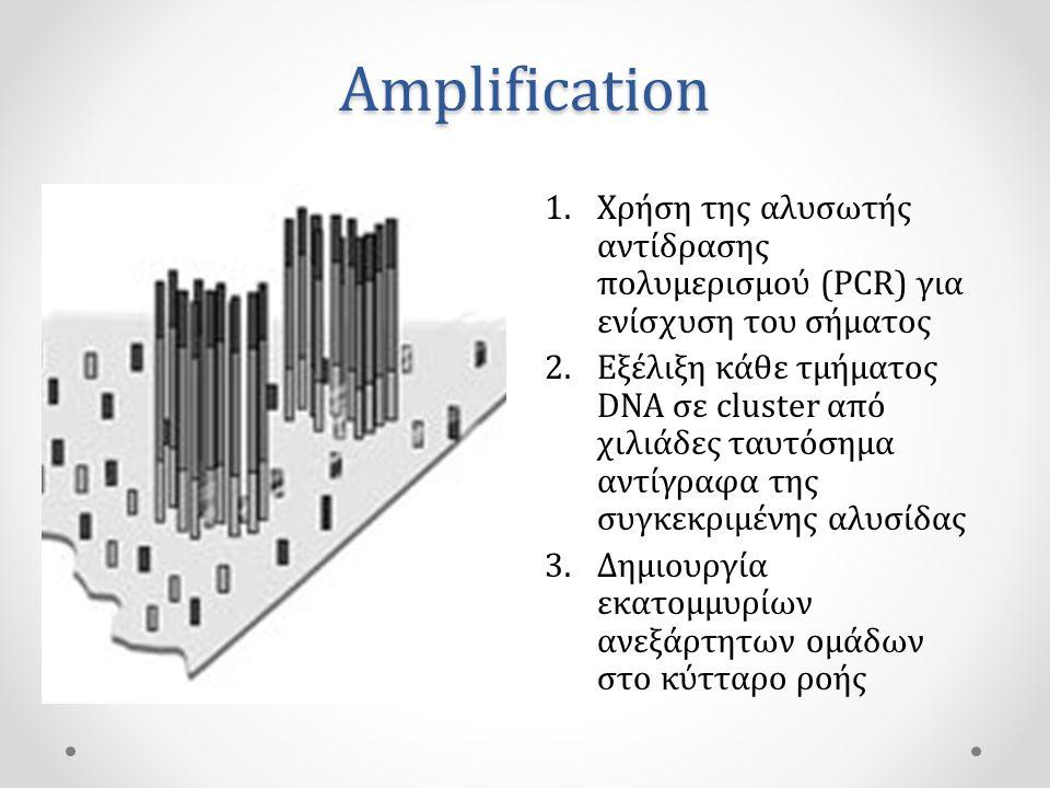 Amplification 1.Χρήση της αλυσωτής αντίδρασης πολυμερισμού (PCR) για ενίσχυση του σήματος 2.Εξέλιξη κάθε τμήματος DNA σε cluster από χιλιάδες ταυτόσημα αντίγραφα της συγκεκριμένης αλυσίδας 3.Δημιουργία εκατομμυρίων ανεξάρτητων ομάδων στο κύτταρο ροής