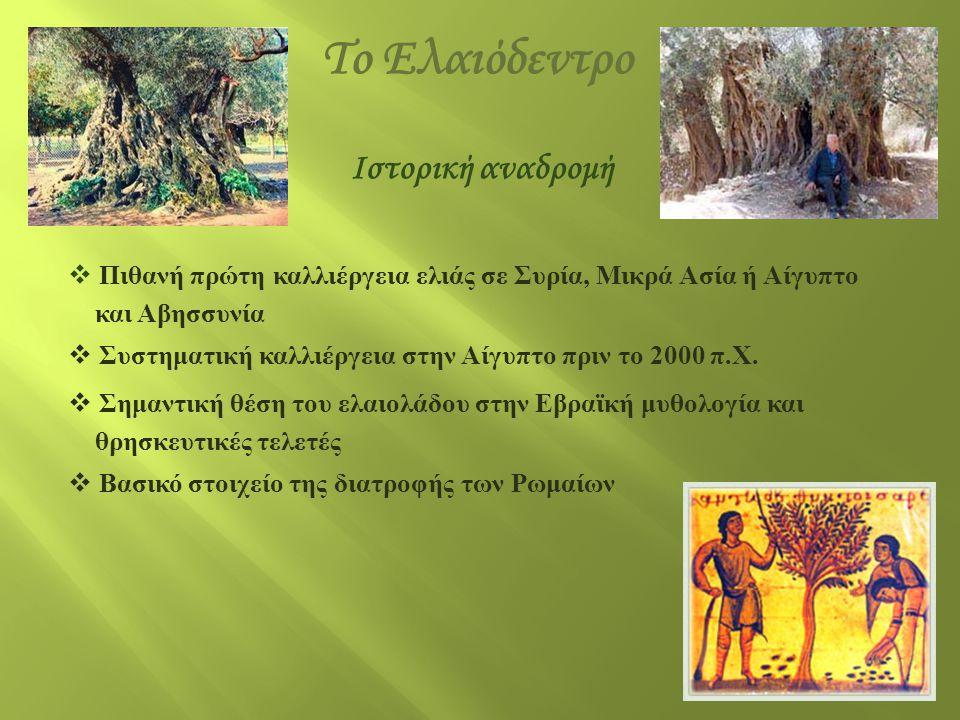 Ιστορική αναδρομή  Βασικότατο συστατικό της διατροφής των Αρχαίων Ελλήνων  Χρήση του ελαιολάδου στις θρησκευτικές και νεκρώσιμες τελετές  Χρήση του ελαιολάδου ως φαρμάκου και καλλυντικού  Χρήση του ελαιοξύλου για την κατασκευή επίπλων και εργαλείων  Χρήση φύλλων και κλαδιών για την κατασκευή στρωμάτων  Απόδειξη της σημασίας του μέσω πληθώρας αρχαιολογικών ευρημάτων Το Ελαιόδεντρο