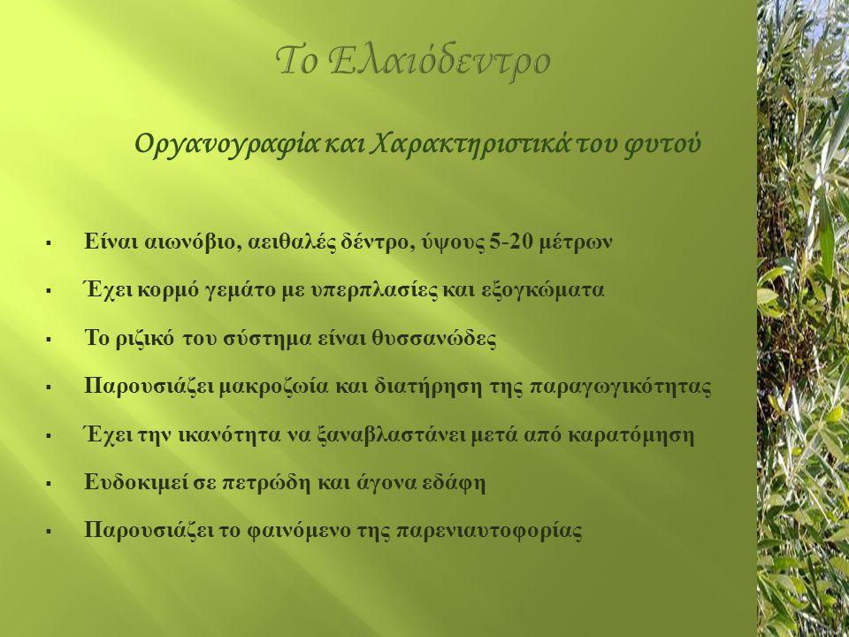 Το Ελαιόδεντρο Ελληνικές Λεπτόκαρπες: Αγριελιά, Κορωνέικη, Κουτσουρελιά, Λιανολιά Κερκύρας, Μαστοειδής Μεσόκαρπες: Αδραμμυτίνη, Βαλανολιά, Θρουμπολιά, Μεγαρίτικη, Πικρολιά, Καλοκαιρίδα, Δαφνελιά Αδρόκαρπες: Αμυγδαλολιά, Βασιλικάδα, Γαΐδουρελιά, Καρολία, Καρυδολιά, Καλαμών Ξένες Ισπανικές: Negral, Arbequine, Verdial, Picuar, Hojiblanca Ιταλικές: Razzo, Corregio, Frantoio Γαλλικές: Agladeau, Araban, Colombale, Verdale, Saurine Λιβανέζικες: Soury, Beladi, Ayrouni, Chamy, Smoukmoki Ποικιλίες Ελιάς
