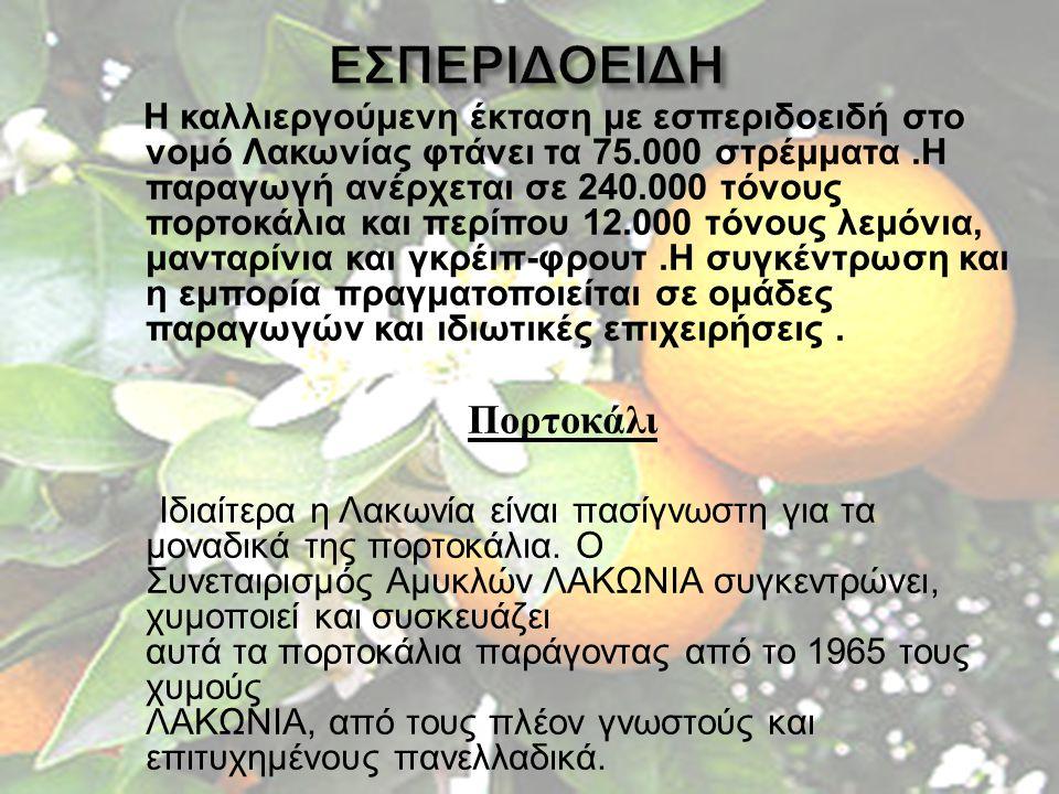 Η καλλιεργούμενη έκταση με εσπεριδοειδή στο νομό Λακωνίας φτάνει τα 75.000 στρέμματα. Η παραγωγή ανέρχεται σε 240.000 τόνους πορτοκάλια και περίπου 12