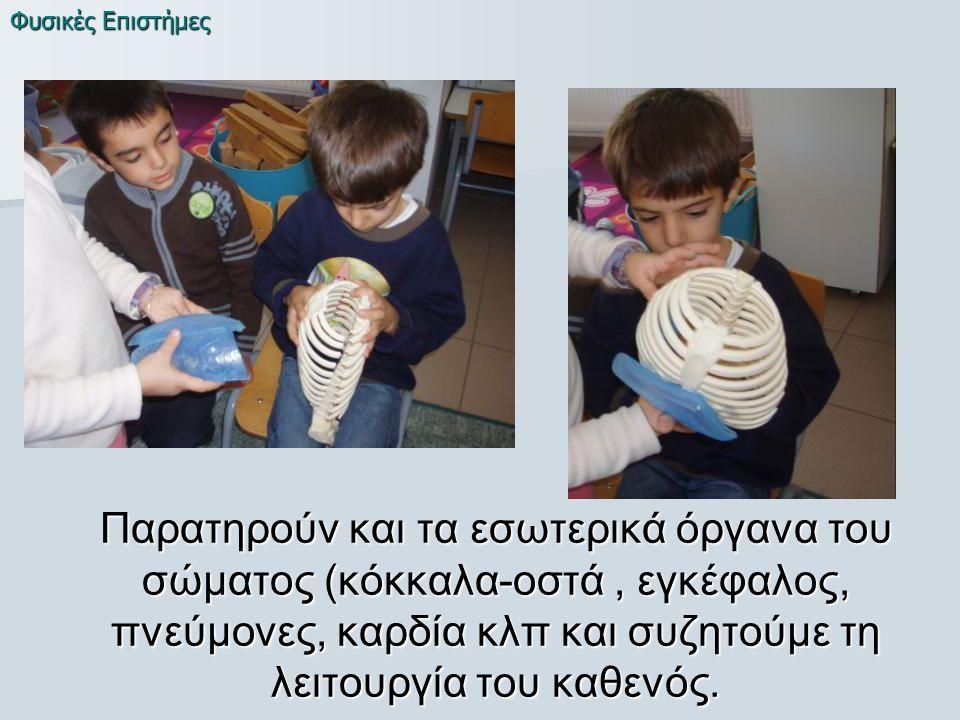 Παρατηρούν και τα εσωτερικά όργανα του σώματος (κόκκαλα-οστά, εγκέφαλος, πνεύμονες, καρδία κλπ και συζητούμε τη λειτουργία του καθενός.