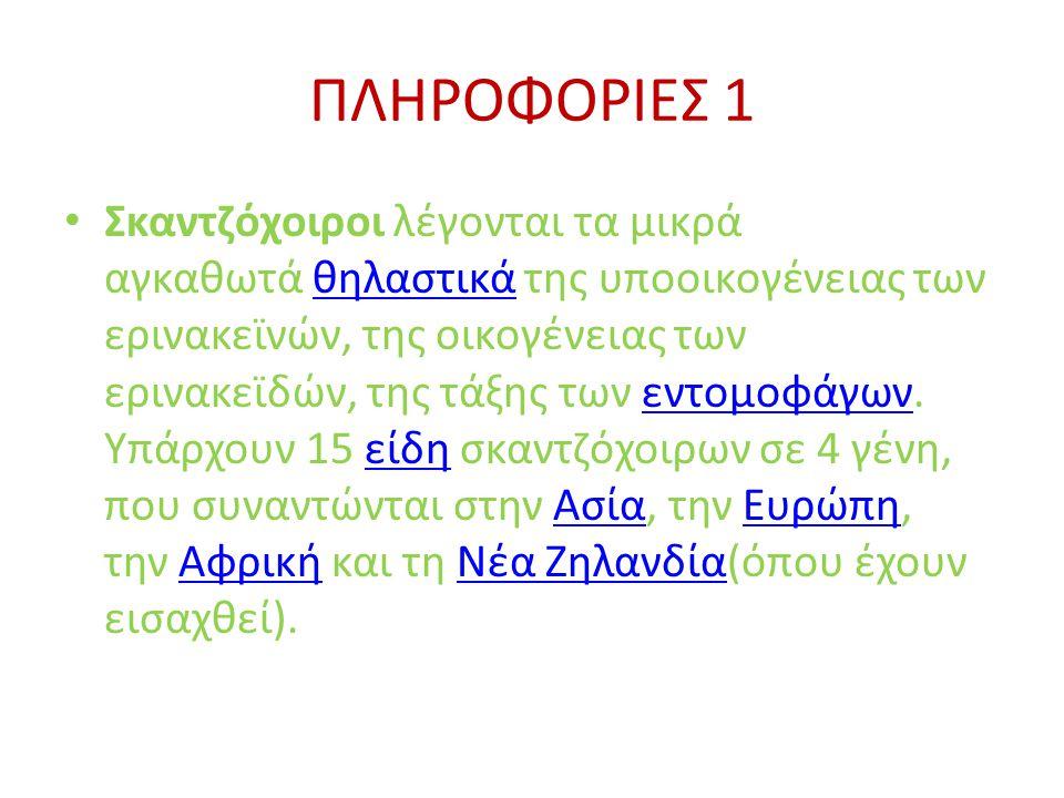 ΠΛΗΡΟΦΟΡΙΕΣ 1 • Σκαντζόχοιροι λέγονται τα μικρά αγκαθωτά θηλαστικά της υποοικογένειας των ερινακεϊνών, της οικογένειας των ερινακεϊδών, της τάξης των