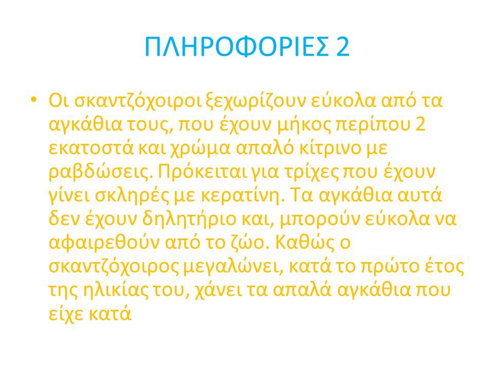 ΠΛΗΡΟΦΟΡΙΕΣ 2 • Οι σκαντζόχοιροι ξεχωρίζουν εύκολα από τα αγκάθια τους, που έχουν μήκος περίπου 2 εκατοστά και χρώμα απαλό κίτρινο με ραβδώσεις. Πρόκε
