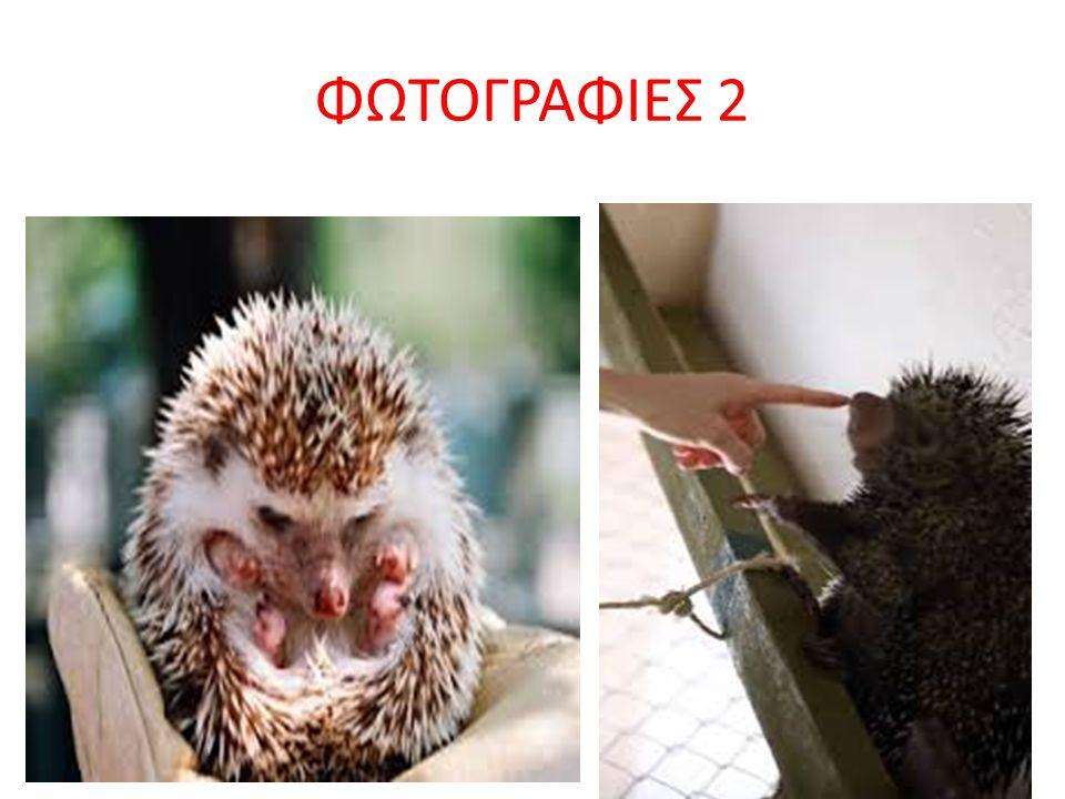 ΠΛΗΡΟΦΟΡΙΕΣ 5 ΤΕΛΟΣ • Μου αρέσουνε πολύ οι σκαντζόχοιροι γιατί • είναι πολύ γλυκά και τριχωτά ζώα…