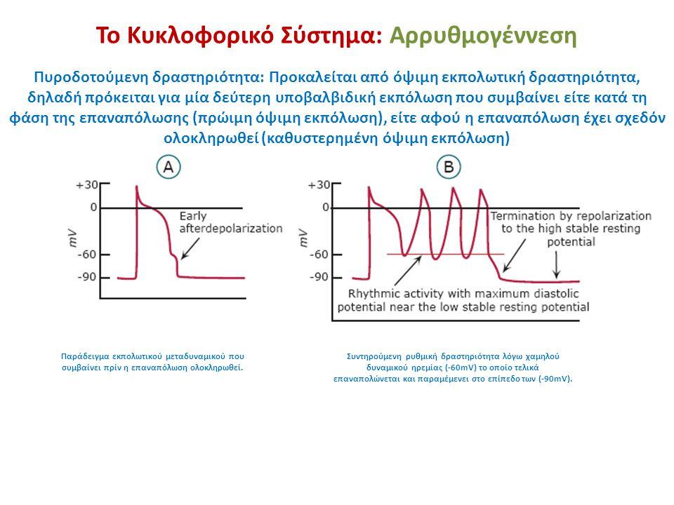 Το Κυκλοφορικό Σύστημα: Αρρυθμογέννεση Πυροδοτούμενη δραστηριότητα: Προκαλείται από όψιμη εκπολωτική δραστηριότητα, δηλαδή πρόκειται για μία δεύτερη υ