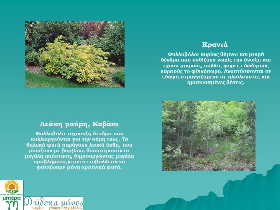 Κρανιά Φυλλοβόλοι κυρίως θάμνοι και μικρά δένδρα που ανθίζουν νωρίς την άνοιξη και έχουν μικρούς, πολλές φορές εδώδιμους καρπούς το φθινόπωρο. Αναπτύσ
