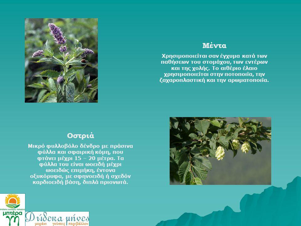 Μέντα Χρησιμοποιείται σαν έγχυμα κατά των παθήσεων του στομάχου, των εντέρων και της χολής. Το αιθέριο έλαιο χρησιμοποιείται στην ποτοποιΐα, την ζαχαρ