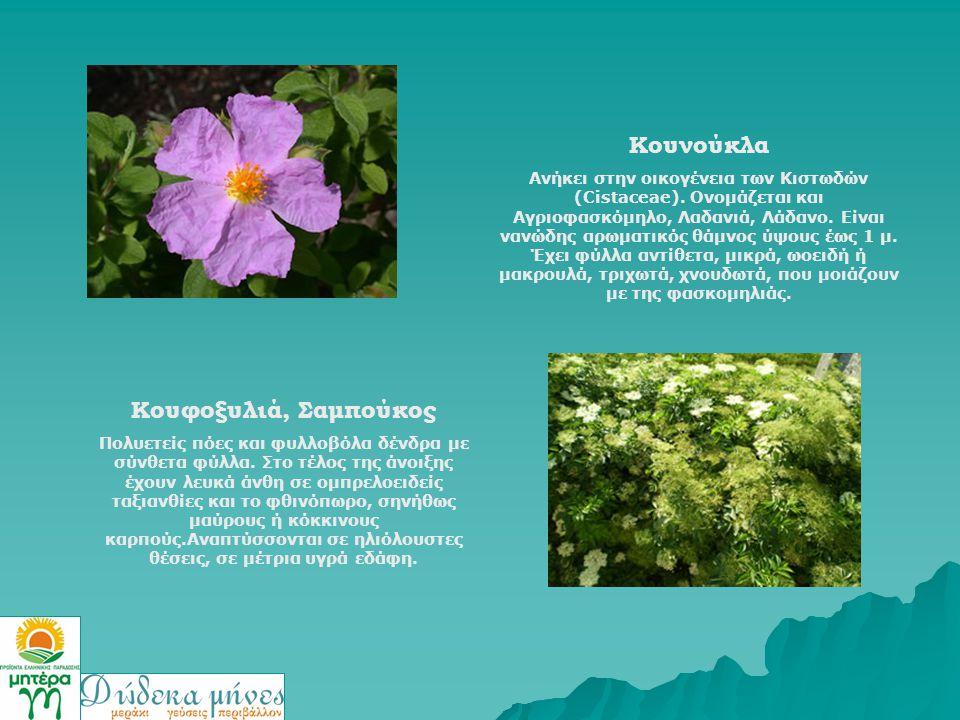 Κουνούκλα Ανήκει στην οικογένεια των Κιστωδών (Cistaceae). Ονομάζεται και Αγριοφασκόμηλο, Λαδανιά, Λάδανο. Είναι νανώδης αρωματικός θάμνος ύψους έως 1
