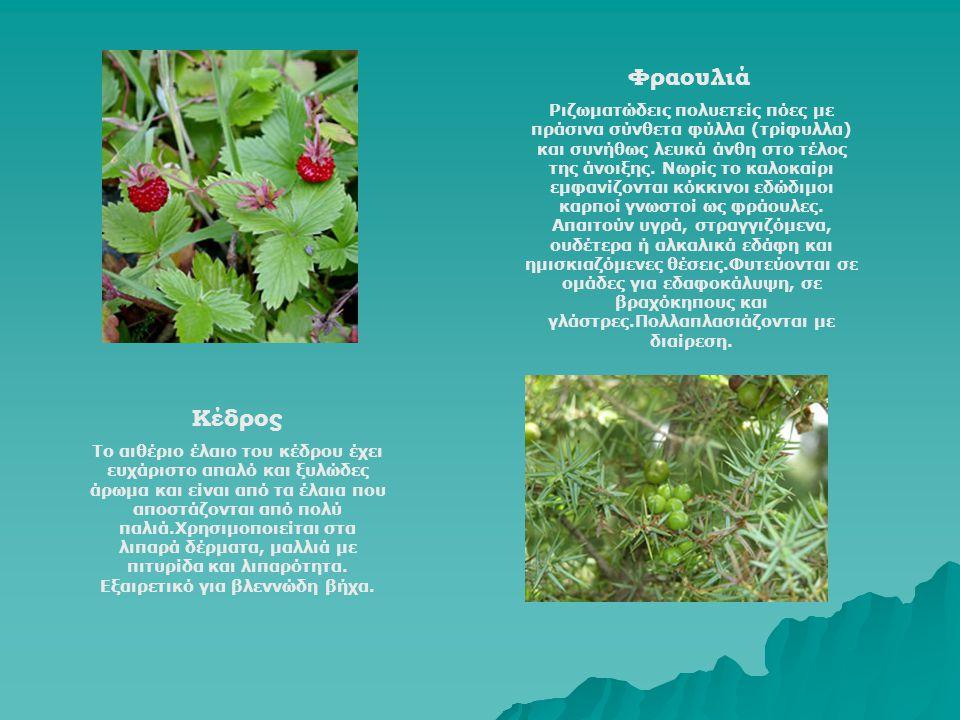Φραουλιά Ριζωματώδεις πολυετείς πόες με πράσινα σύνθετα φύλλα (τρίφυλλα) και συνήθως λευκά άνθη στο τέλος της άνοιξης. Νωρίς το καλοκαίρι εμφανίζονται
