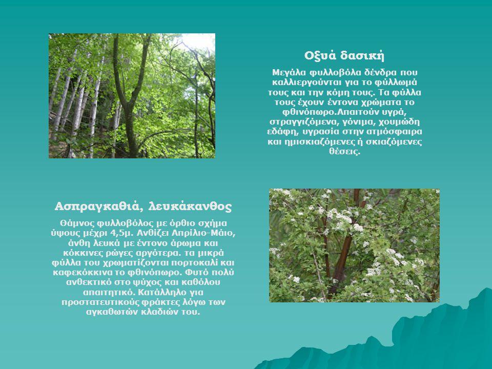 Οξυά δασική Μεγάλα φυλλοβόλα δένδρα που καλλιεργούνται για το φύλλωμά τους και την κόμη τους. Τα φύλλα τους έχουν έντονα χρώματα το φθινόπωρο.Απαιτούν