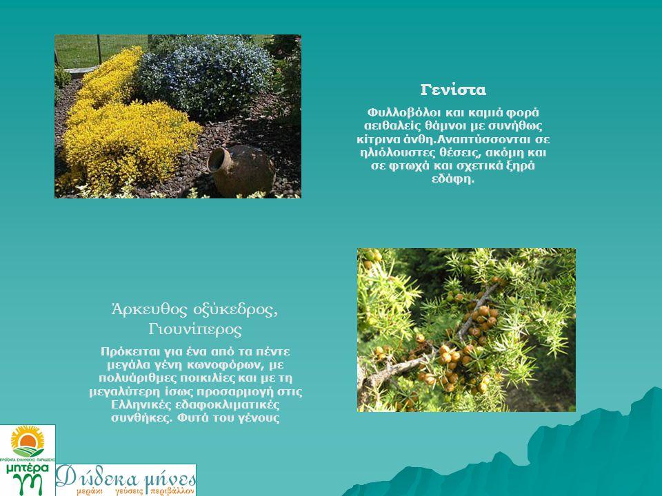 Γενίστα Φυλλοβόλοι και καμιά φορά αειθαλείς θάμνοι με συνήθως κίτρινα άνθη.Αναπτύσσονται σε ηλιόλουστες θέσεις, ακόμη και σε φτωχά και σχετικά ξηρά εδ