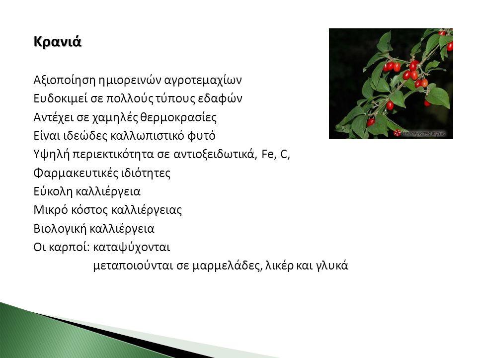 Κρανιά Αξιοποίηση ημιορεινών αγροτεμαχίων Ευδοκιμεί σε πολλούς τύπους εδαφών Αντέχει σε χαμηλές θερμοκρασίες Είναι ιδεώδες καλλωπιστικό φυτό Υψηλή περ