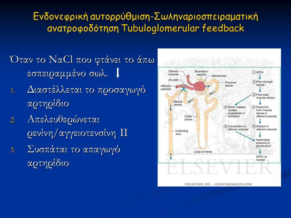 Tubuloglomerular feedback Ενδονεφρική αυτορρύθμιση-Σωληναριοσπειραματική ανατρoφοδότηση Tubuloglomerular feedback Όταν το ΝαCl που φτάνει το άπω εσπει