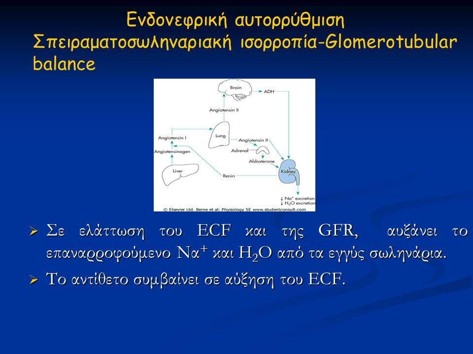 Ενδονεφρική αυτορρύθμιση Σπειραματοσωληναριακή ισορροπία-Glomerotubular balance  Σε ελάττωση του ECF και της GFR, αυξάνει το επαναρροφούμενο Να + και