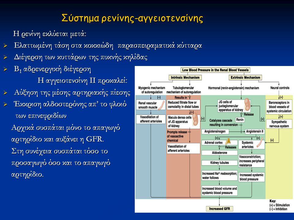 Σύστημα ρενίνης-αγγειοτενσίνης Η ρενίνη εκλύεται μετά: Η ρενίνη εκλύεται μετά:  Ελαττωμένη τάση στα κοκκιώδη παρασπειραματικά κύτταρα  Διέγερση των
