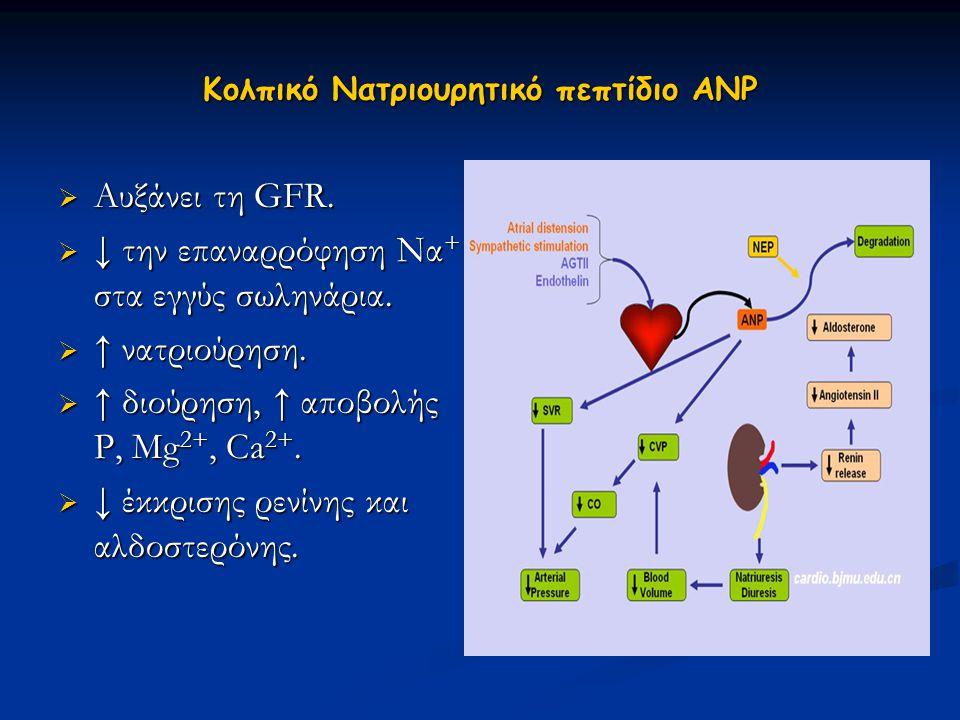 Κολπικό Νατριουρητικό πεπτίδιο ΑΝΡ  Αυξάνει τη GFR.  ↓ την επαναρρόφηση Να + στα εγγύς σωληνάρια.  ↑ νατριούρηση.  ↑ διούρηση, ↑ αποβολής Ρ, Μg 2+