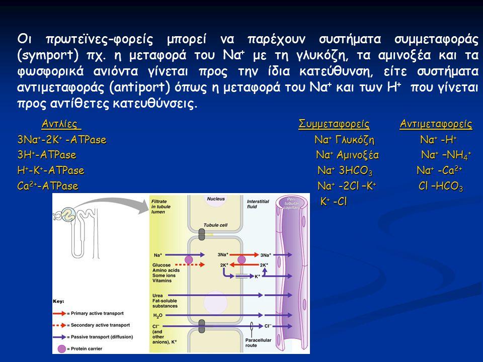 Οι πρωτεϊνες-φορείς μπορεί να παρέχουν συστήματα συμμεταφοράς (symport) πχ. η μεταφορά του Να + με τη γλυκόζη, τα αμινοξέα και τα φωσφορικά ανιόντα γί