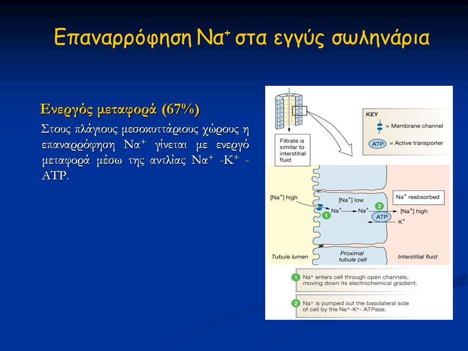 Eπαναρρόφηση Να + στα εγγύς σωληνάρια Ενεργός μεταφορά (67%) Ενεργός μεταφορά (67%) Στους πλάγιους μεσοκυττάριους χώρους η επαναρρόφηση Να + γίνεται μ