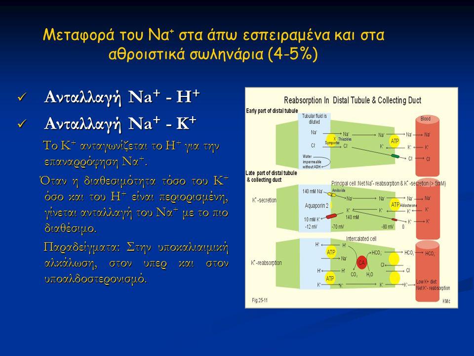 Μεταφορά του Να + στα άπω εσπειραμένα και στα αθροιστικά σωληνάρια (4-5%)  Ανταλλαγή Na + - Η +  Ανταλλαγή Na + - Κ + Το Κ + ανταγωνίζεται το Η + γι
