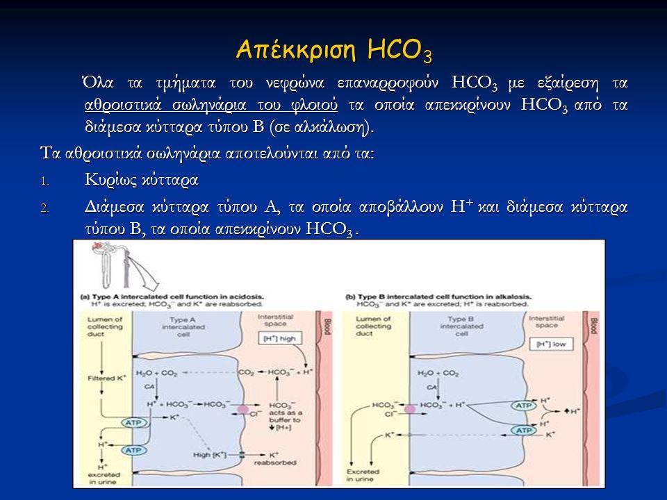 Απέκκριση HCO 3  Όλα τα τμήματα του νεφρώνα επαναρροφούν HCO 3  με εξαίρεση τα αθροιστικά σωληνάρια του φλοιού τα οποία απεκκρίνουν HCO 3  από τα δ