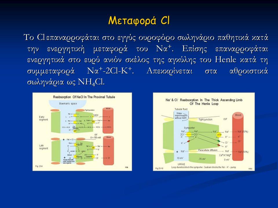 Μεταφορά Cl  Το Cl  επαναρροφάται στο εγγύς ουροφόρο σωληνάριο παθητικά κατά την ενεργητική μεταφορά του Να +. Επίσης επαναρροφάται ενεργητικά στο ε