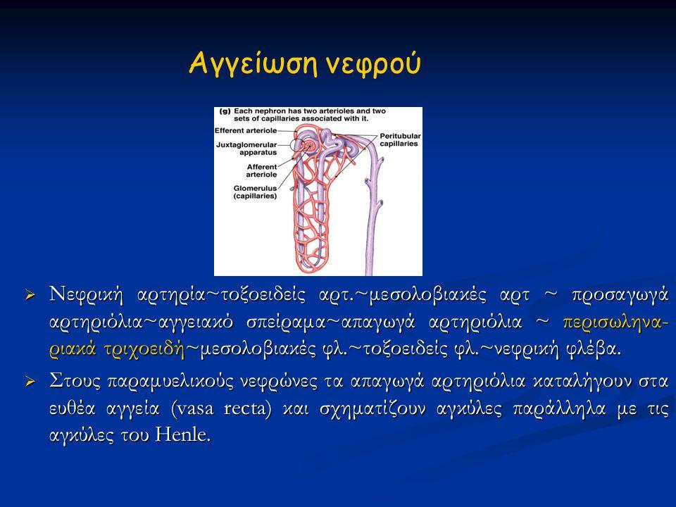 Σύστημα ρενίνης-αγγειοτενσίνης Η ρενίνη εκλύεται μετά: Η ρενίνη εκλύεται μετά:  Ελαττωμένη τάση στα κοκκιώδη παρασπειραματικά κύτταρα  Διέγερση των κυττάρων της πυκνής κηλίδας  Β 1 αδρενεργική διέγερση Η αγγειοτενσίνη ΙΙ προκαλεί: Η αγγειοτενσίνη ΙΙ προκαλεί:  Αύξηση της μέσης αρτηριακής πίεσης  Έκκριση αλδοστερόνης απ' το φλοιό των επινεφριδίων των επινεφριδίων Αρχικά συσπάται μόνο το απαγωγό Αρχικά συσπάται μόνο το απαγωγό αρτηρίδιο και αυξάνει η GFR.