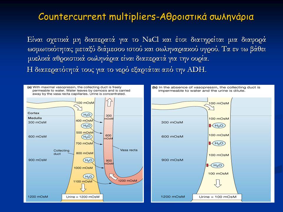 Είναι σχετικά μη διαπερατά για το ΝaCl και έτσι διατηρείται μια διαφορά ωσμωτικότητας μεταξύ διάμεσου ιστού και σωληναριακού υγρού. Τα εν τω βάθει μυε