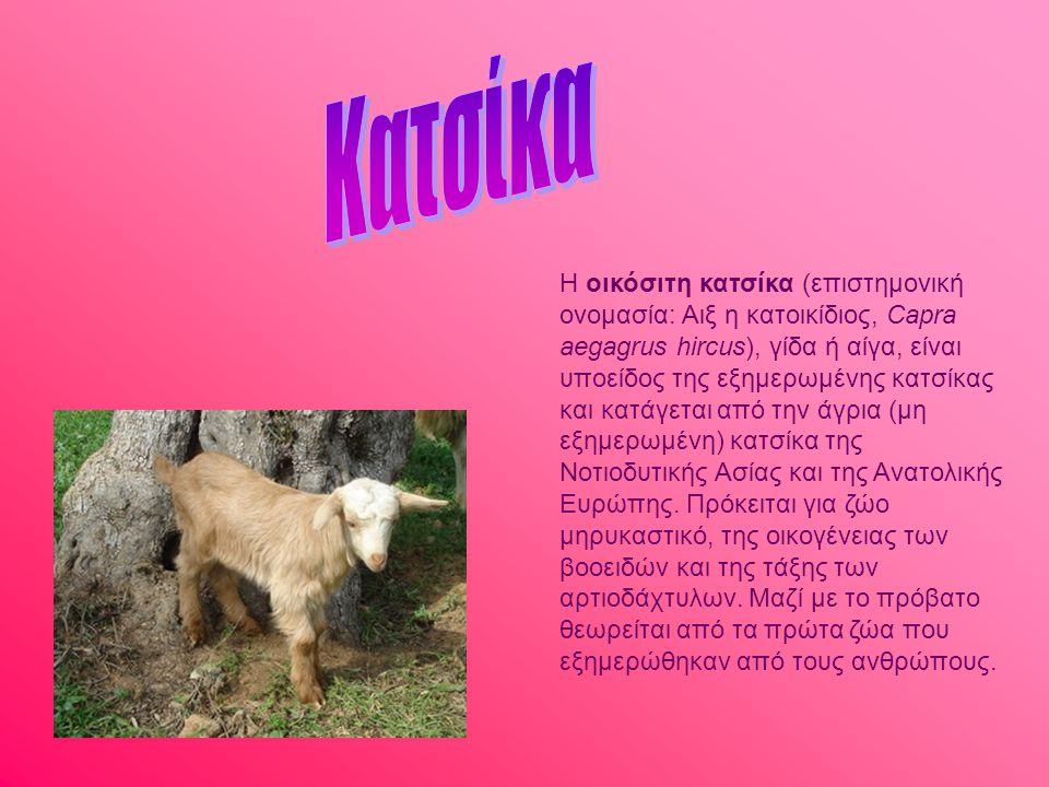 Η οικόσιτη κατσίκα (επιστημονική ονομασία: Αιξ η κατοικίδιος, Capra aegagrus hircus), γίδα ή αίγα, είναι υποείδος της εξημερωμένης κατσίκας και κατάγε