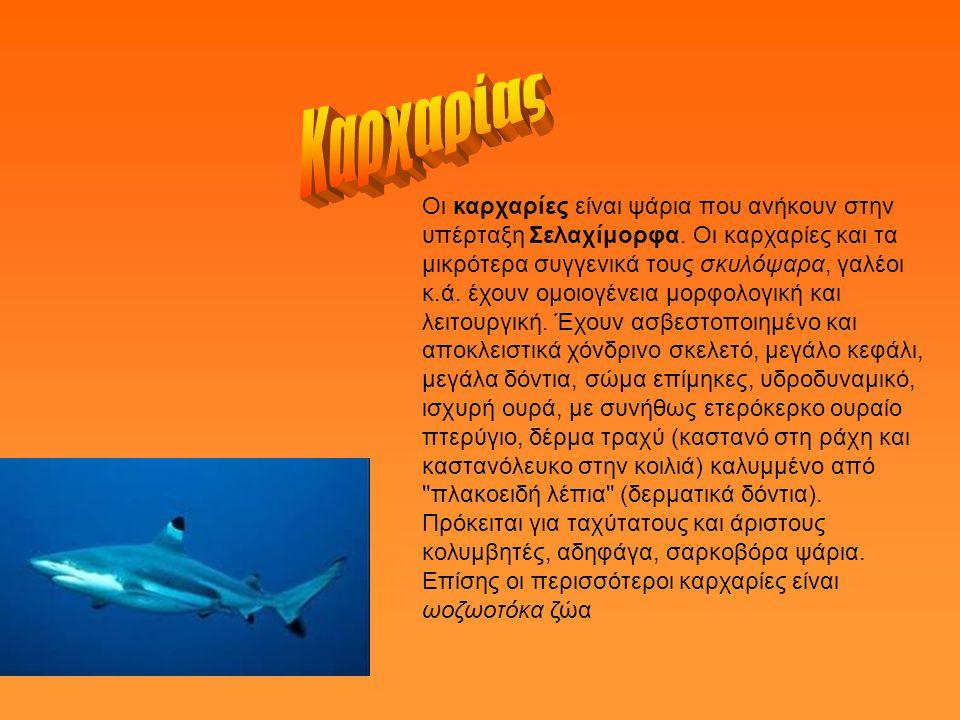 Οι καρχαρίες είναι ψάρια που ανήκουν στην υπέρταξη Σελαχίμορφα.