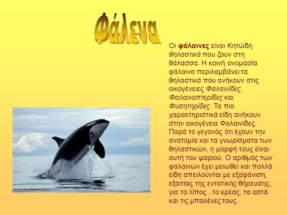 Οι φάλαινες είναι Κητώδη θηλαστικά που ζουν στη θάλασσα. Η κοινή ονομασία φάλαινα περιλαμβάνει τα θηλαστικά που ανήκουν στις οικογένειες Φαλαινίδες, Φ