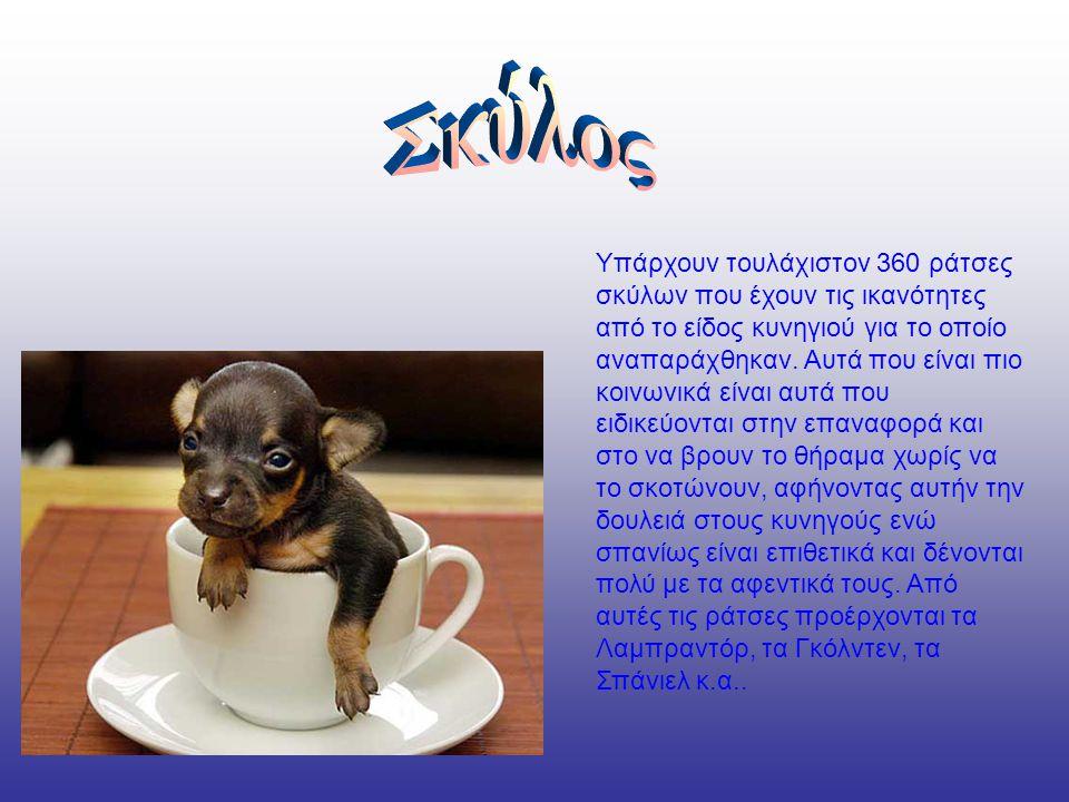 Υπάρχουν τουλάχιστον 360 ράτσες σκύλων που έχουν τις ικανότητες από το είδος κυνηγιού για το οποίο αναπαράχθηκαν.