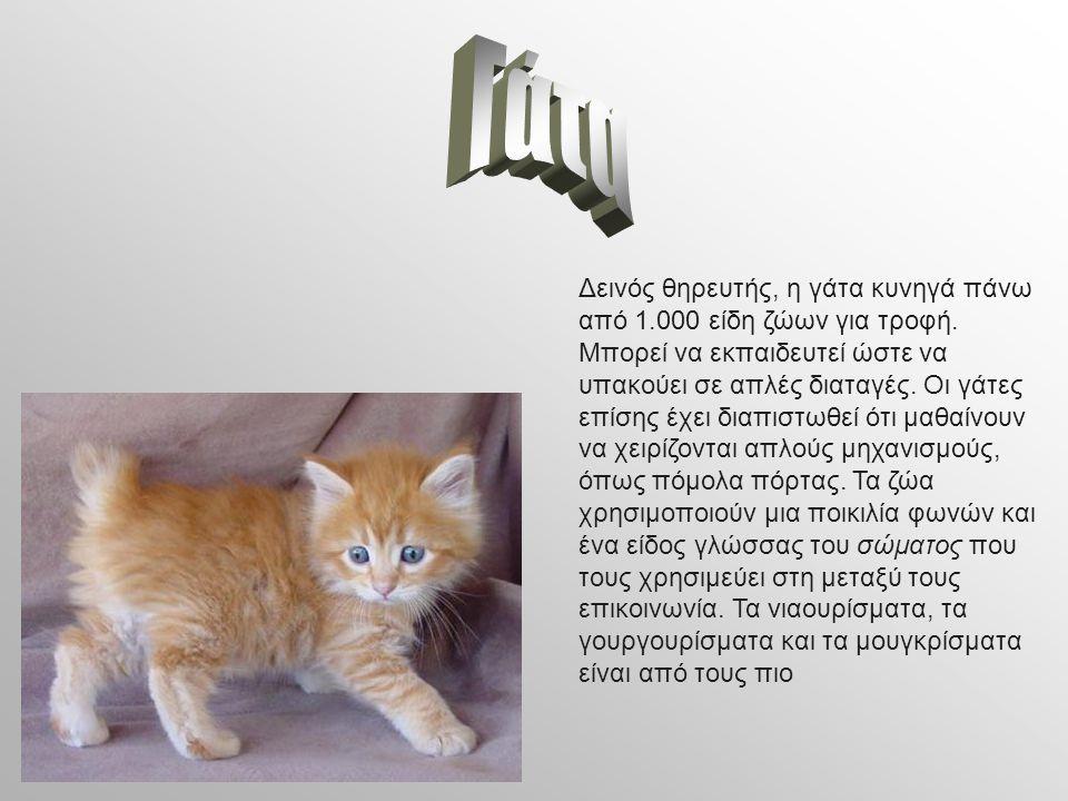 Δεινός θηρευτής, η γάτα κυνηγά πάνω από 1.000 είδη ζώων για τροφή. Μπορεί να εκπαιδευτεί ώστε να υπακούει σε απλές διαταγές. Οι γάτες επίσης έχει διαπ