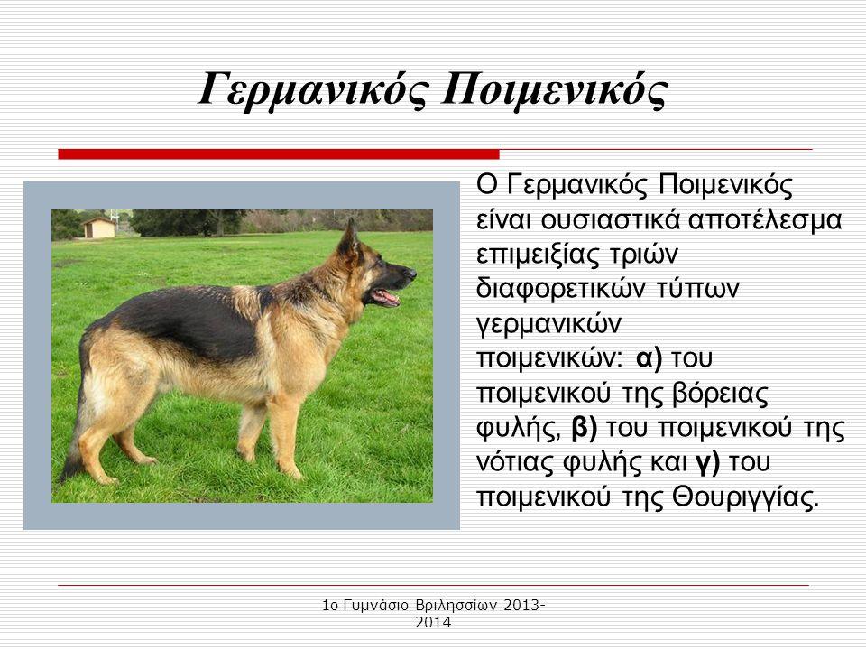 Οι ράτσες των σκύλων