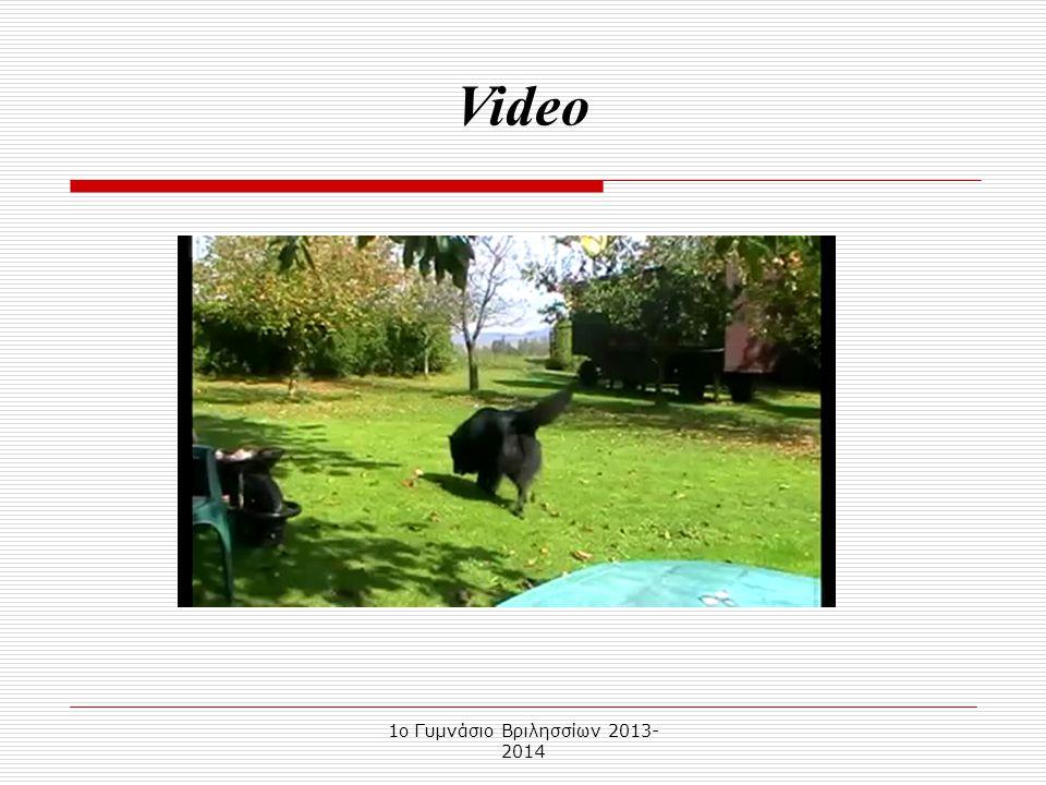 1o Γυμνάσιο Βριλησσίων 2013- 2014 Ο Βέλγικος Ποιμενικός είναι ράτσα σκύλου, γνωστή στην καθημερινότητα ως Βέλγικο Λυκόσκυλο. Η καταγωγή του είναι από