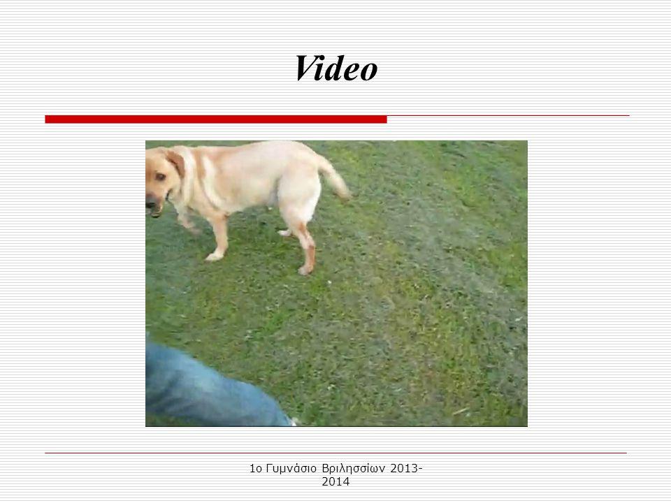 1o Γυμνάσιο Βριλησσίων 2013- 2014 Το Λαμπραντόρ είναι σκυλί μεσαίου προς μεγάλου μεγέθους. Το τρίχωμά του είναι σχετικά κοντό και γυαλιστερό. Οι χρωμα