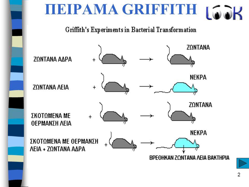2 ΠΕΙΡΑΜΑ GRIFFITH
