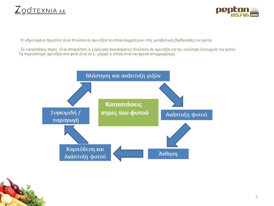 3 Η Πεπτόνη ενισχύει την βλάστηση και την ανάπτυξη των ριζών με αποτέλεσμα πιο σφριγηλά φυτά.
