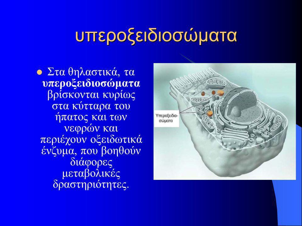 υπεροξειδιοσώματα  Στα θηλαστικά, τα υπεροξειδιοσώματα βρίσκονται κυρίως στα κύτταρα του ήπατος και των νεφρών και περιέχουν οξειδωτικά ένζυμα, που β