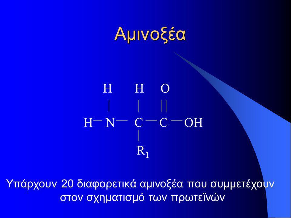 Αμινοξέα H H O Η Ν C C OH R 1 Υπάρχουν 20 διαφορετικά αμινοξέα που συμμετέχουν στον σχηματισμό των πρωτεϊνών