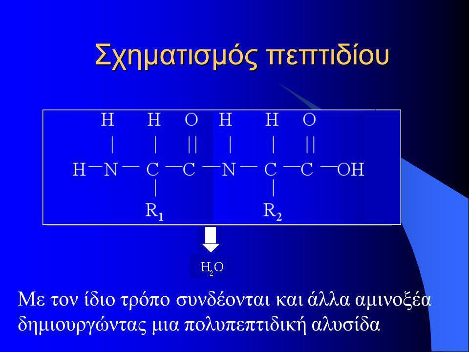 Σχηματισμός πεπτιδίου Με τον ίδιο τρόπο συνδέονται και άλλα αμινοξέα δημιουργώντας μια πολυπεπτιδική αλυσίδα