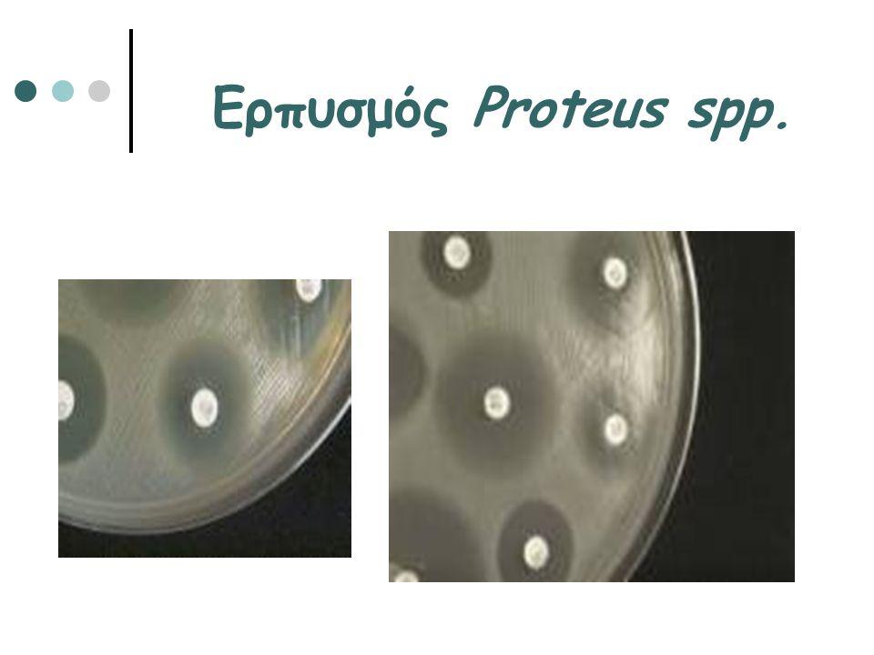 Ερπυσμός Proteus spp.
