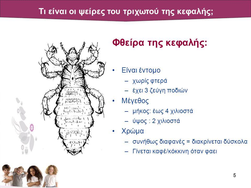 5 Φθείρα της κεφαλής: •Είναι έντομο –χωρίς φτερά –έχει 3 ζεύγη ποδιών •Μέγεθος –μήκος: έως 4 χιλιοστά –ύψος : 2 χιλιοστά •Χρώμα –συνήθως διαφανές = διακρίνεται δύσκολα –Γίνεται καφέ/κόκκινη όταν φαει Τι είναι οι ψείρες του τριχωτού της κεφαλής;