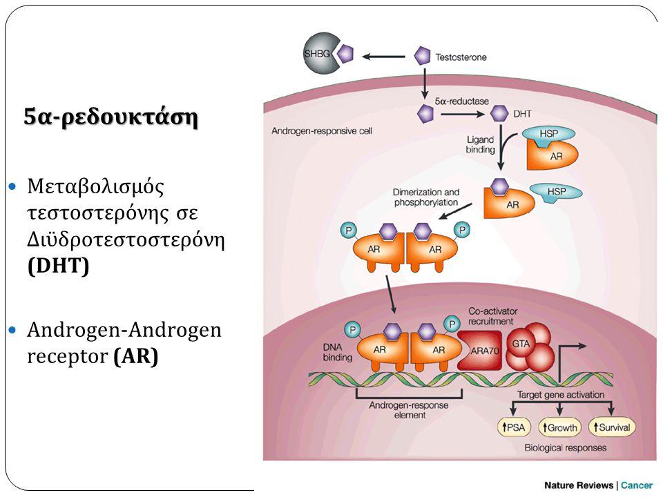 5 α-ρεδουκτάση 5 α-ρεδουκτάση  Μεταβολισμός τεστοστερόνης σε Διϋδροτεστοστερόνη (DHT)  Androgen-Androgen receptor (AR)