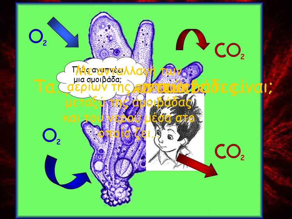 Τα κόκκινα μαντεύετε τι είναι;…μια χούφτα αμοιβάδες… Πώς αναπνέει μια αμοιβάδα; Με ανταλλαγή των αερίων της αναπνοής μεταξύ της αμοιβάδας και του νερο
