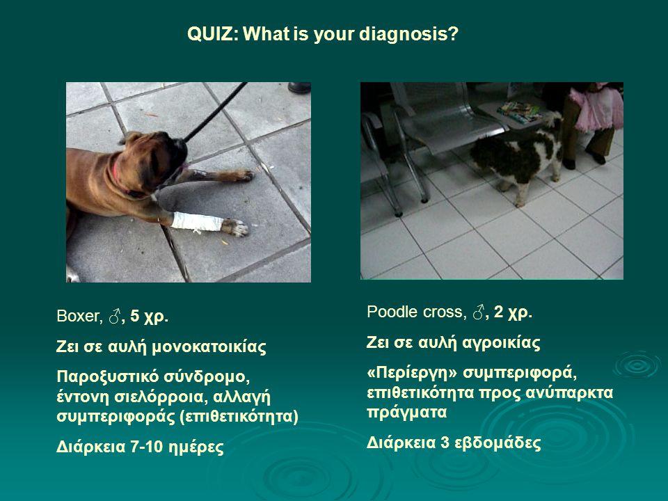 Boxer, ♂, 5 χρ. Ζει σε αυλή μονοκατοικίας Παροξυστικό σύνδρομο, έντονη σιελόρροια, αλλαγή συμπεριφοράς (επιθετικότητα) Διάρκεια 7-10 ημέρες QUIZ: What