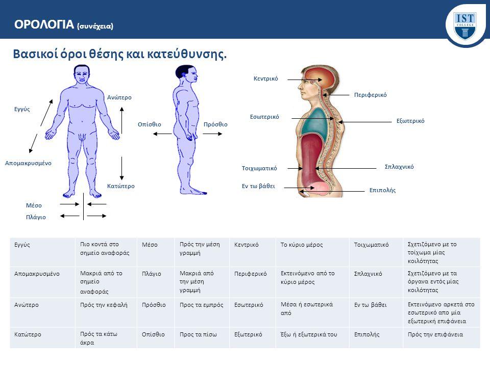Βασικοί όροι θέσης και κατεύθυνσης. ΟΡΟΛΟΓΙΑ (συνέχεια) Εγγύς Απομακρυσμένο Ανώτερο Κατώτερο ΟπίσθιοΠρόσθιο Μέσο Κεντρικό Περιφερικό Εσωτερικό Εξωτερι