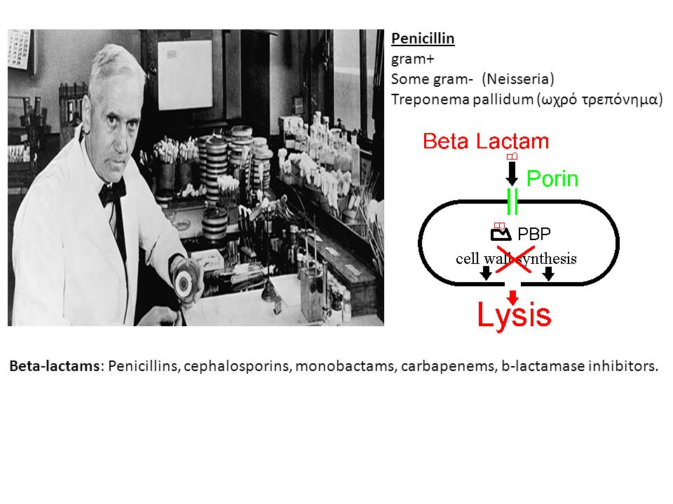 Penicillin gram+ Some gram- (Neisseria) Treponema pallidum (ωχρό τρεπόνημα) Beta-lactams: Penicillins, cephalosporins, monobactams, carbapenems, b-lac