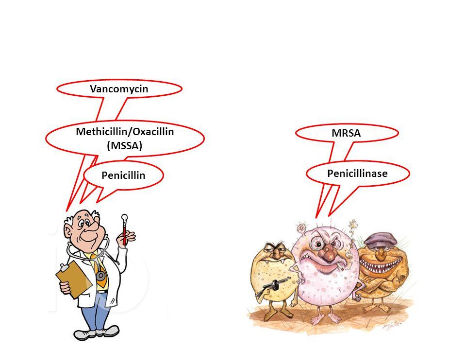 Vancomycin MRSA Methicillin/Oxacillin (MSSA) Penicillin Penicillinase