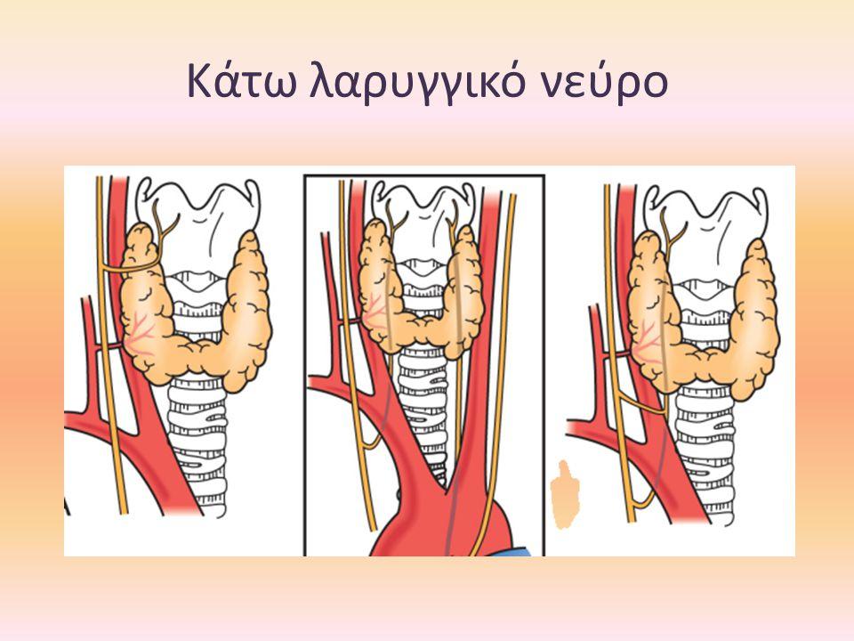 Κάτω λαρυγγικό νεύρο